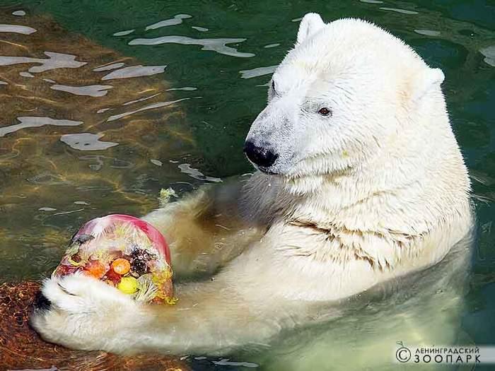 Зоопарк день рождения ребенка